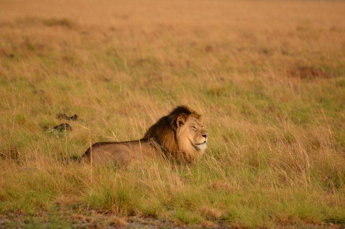 5-Days Super Malawi Safari