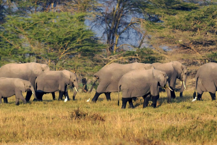 4-Day Southern Kenya Wilderness Safari