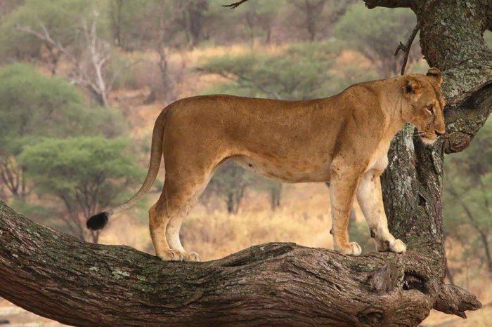 5-Day Majete Wildlife Reserve Experience