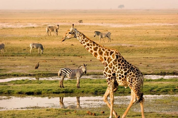 4-Day Maasai Mara Game-Lake Nakuru Park Safari