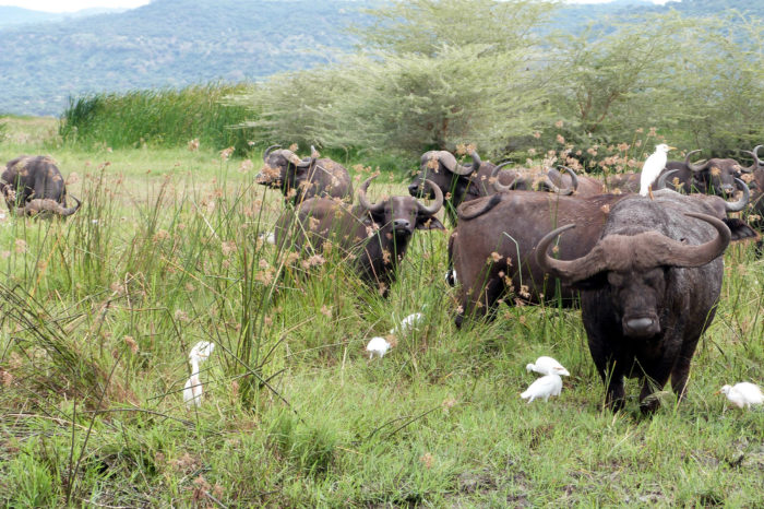lake manyara national park 700x466 - Home