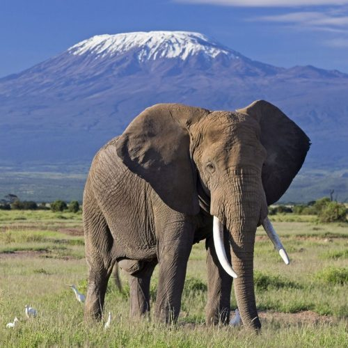 2 Nights Amboseli Holiday With SGR