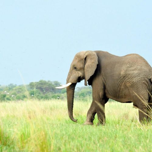 3 Days Amboseli Safari Classic