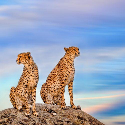 4 Days Lake Naivasha & Masai Mara Safari
