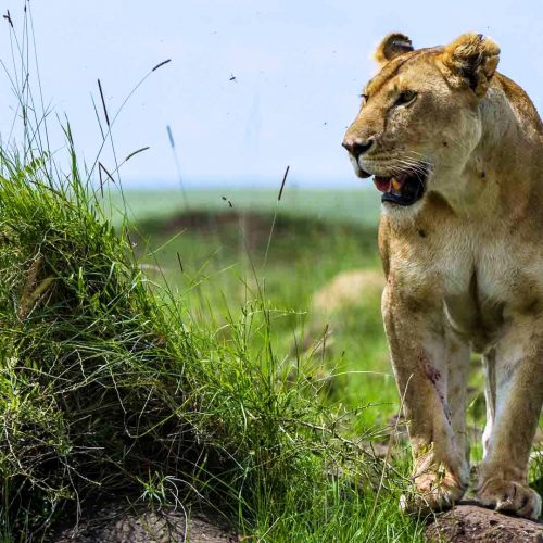 6 Days Touch of Kenya Safari