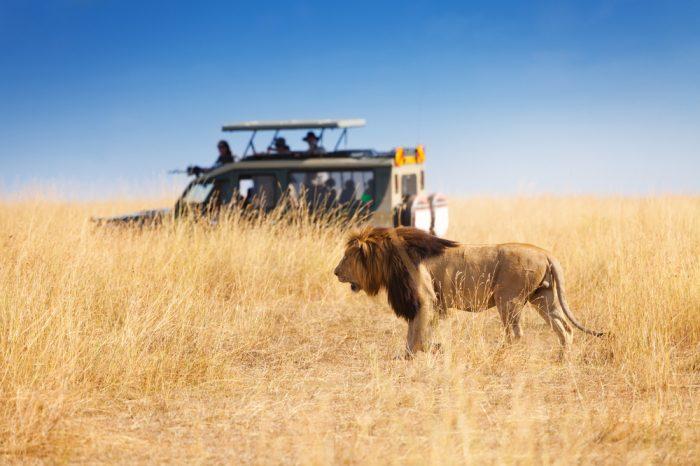 2 Nights Masai Mara Valentine Deal